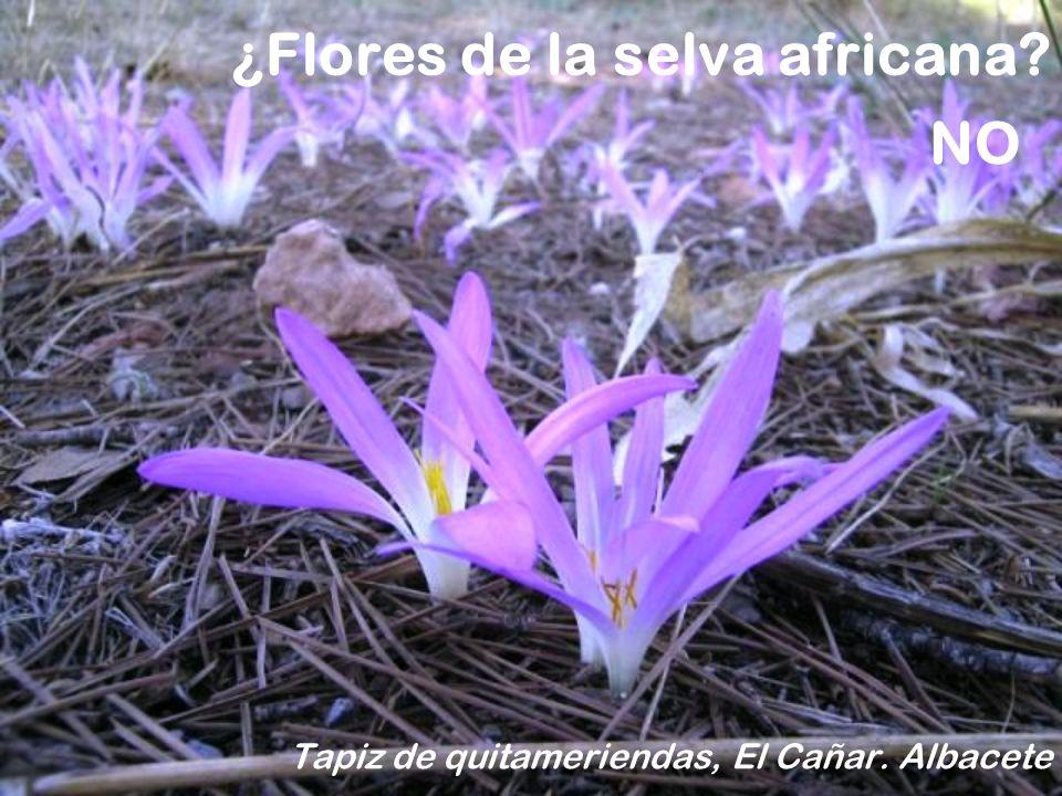 ¿Flores de la selva africana