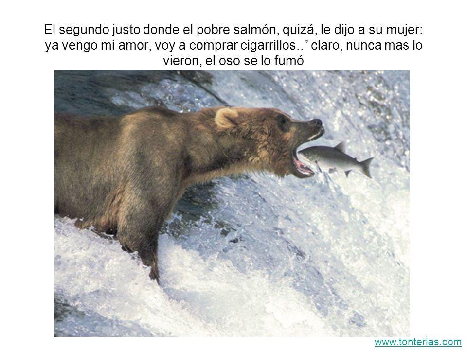 El segundo justo donde el pobre salmón, quizá, le dijo a su mujer: ya vengo mi amor, voy a comprar cigarrillos.. claro, nunca mas lo vieron, el oso se lo fumó