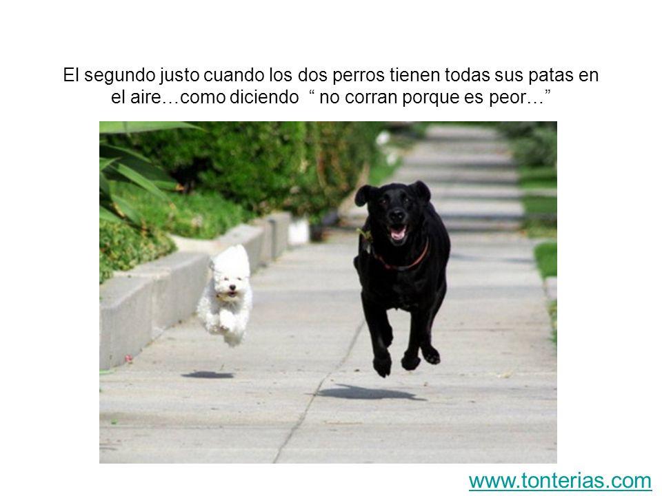 El segundo justo cuando los dos perros tienen todas sus patas en el aire…como diciendo no corran porque es peor…