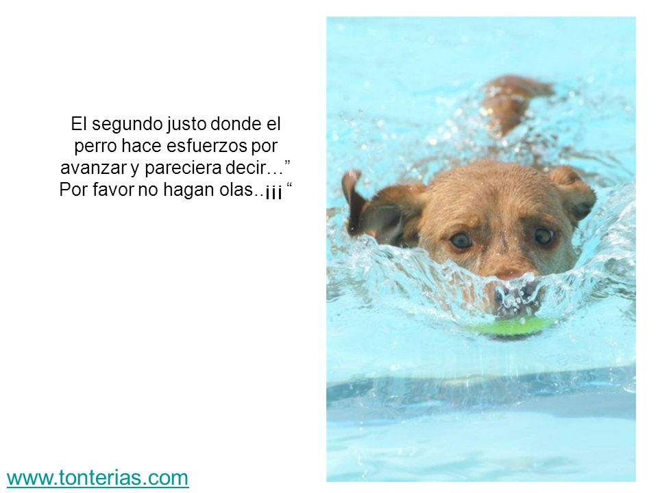 El segundo justo donde el perro hace esfuerzos por avanzar y pareciera decir… Por favor no hagan olas..¡¡¡