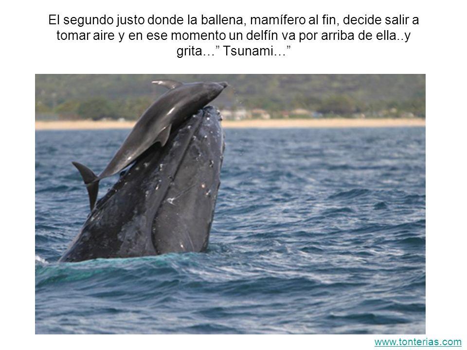 El segundo justo donde la ballena, mamífero al fin, decide salir a tomar aire y en ese momento un delfín va por arriba de ella..y grita… Tsunami…