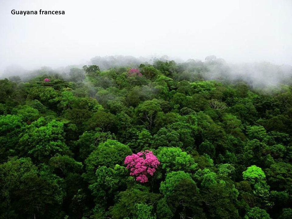 Guayana francesa