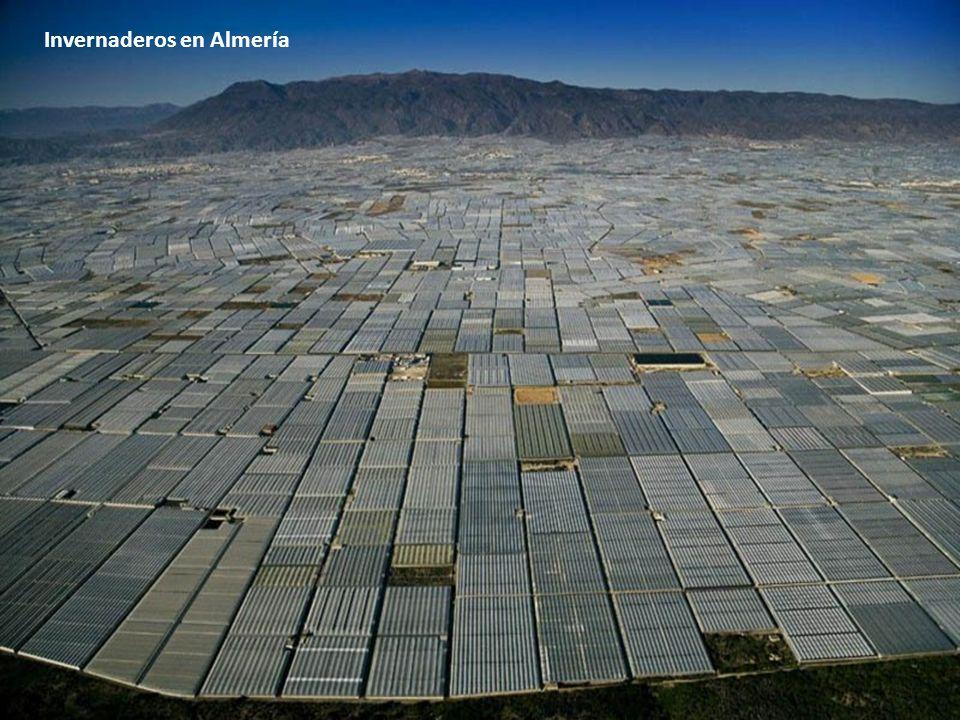 Invernaderos en Almería