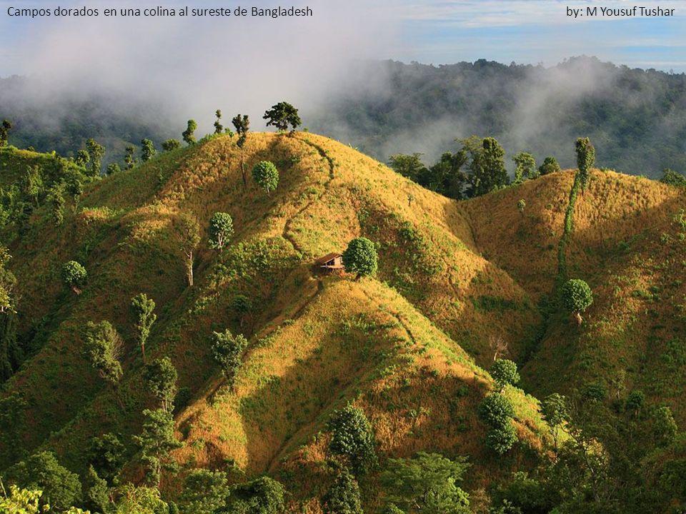 Campos dorados en una colina al sureste de Bangladesh by: M Yousuf Tushar