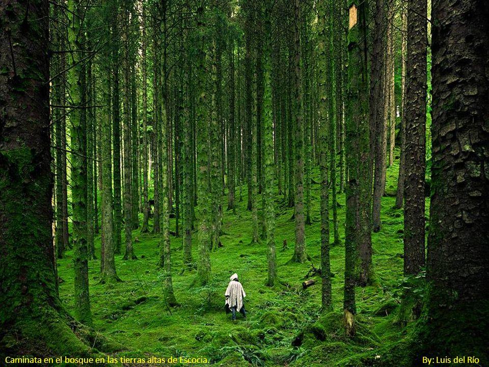Caminata en el bosque en las tierras altas de Escocia. By: Luis del Río