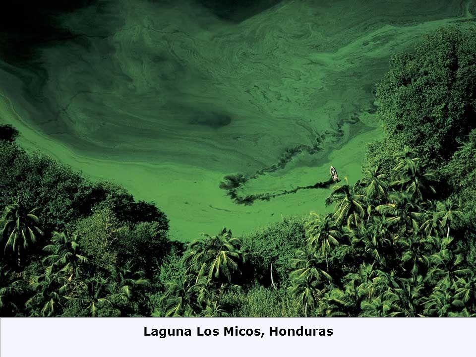 Laguna Los Micos, Honduras