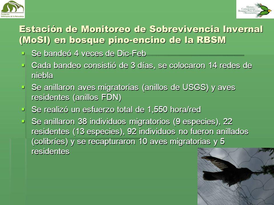Estación de Monitoreo de Sobrevivencia Invernal (MoSI) en bosque pino-encino de la RBSM