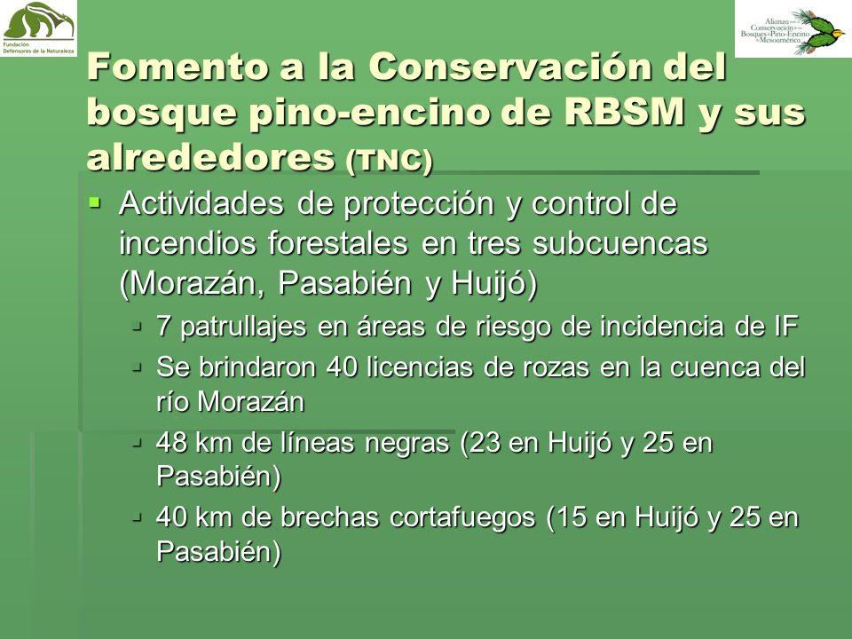 Fomento a la Conservación del bosque pino-encino de RBSM y sus alrededores (TNC)