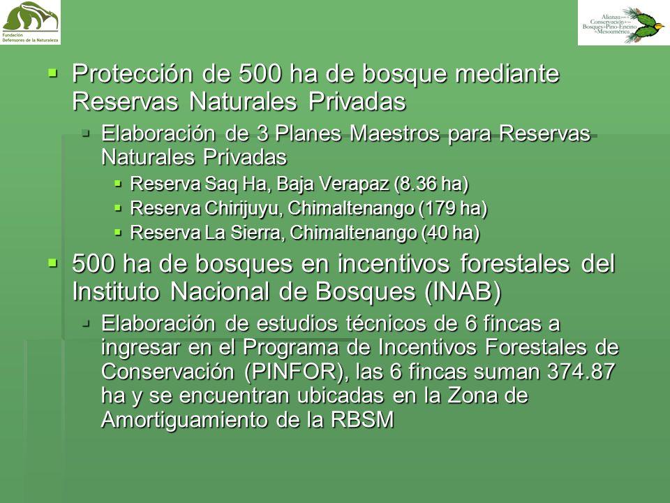 Protección de 500 ha de bosque mediante Reservas Naturales Privadas
