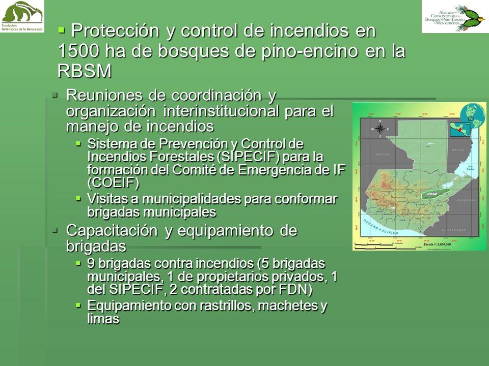 Protección y control de incendios en 1500 ha de bosques de pino-encino en la RBSM