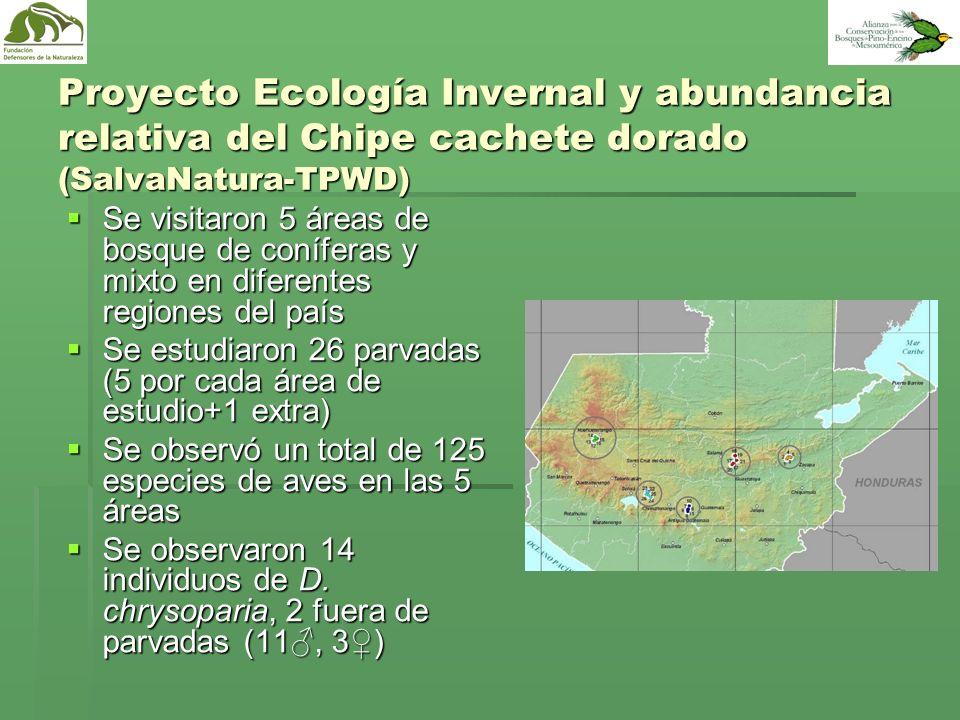 Proyecto Ecología Invernal y abundancia relativa del Chipe cachete dorado (SalvaNatura-TPWD)