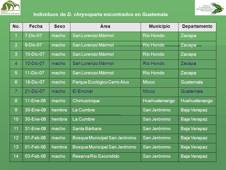 Individuos de D. chrysoparia encontrados en Guatemala