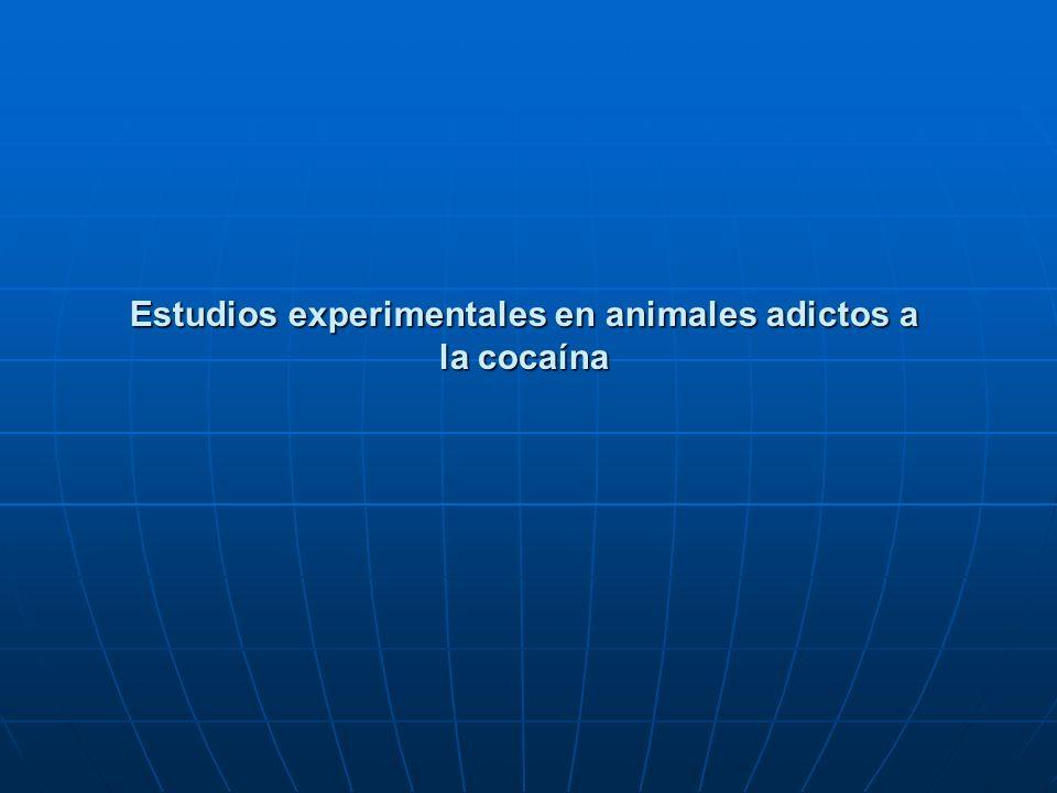 Estudios experimentales en animales adictos a la cocaína