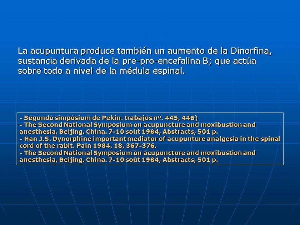 La acupuntura produce también un aumento de la Dinorfina, sustancia derivada de la pre-pro-encefalina B; que actúa sobre todo a nivel de la médula espinal.
