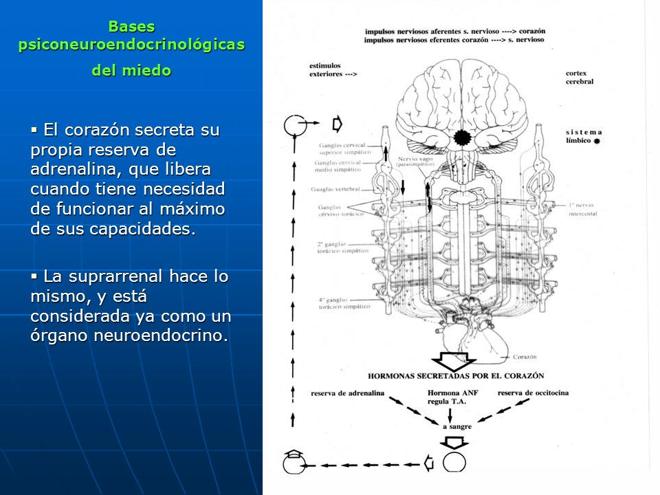 Bases psiconeuroendocrinológicas