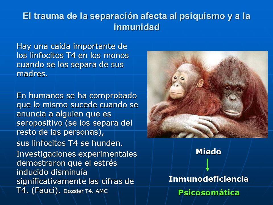 El trauma de la separación afecta al psiquismo y a la inmunidad