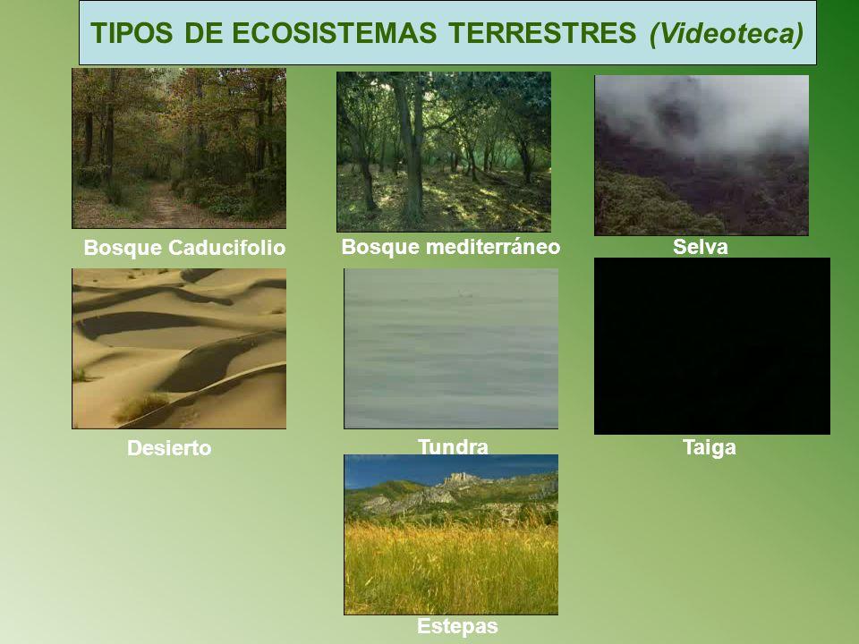 TIPOS DE ECOSISTEMAS TERRESTRES (Videoteca)