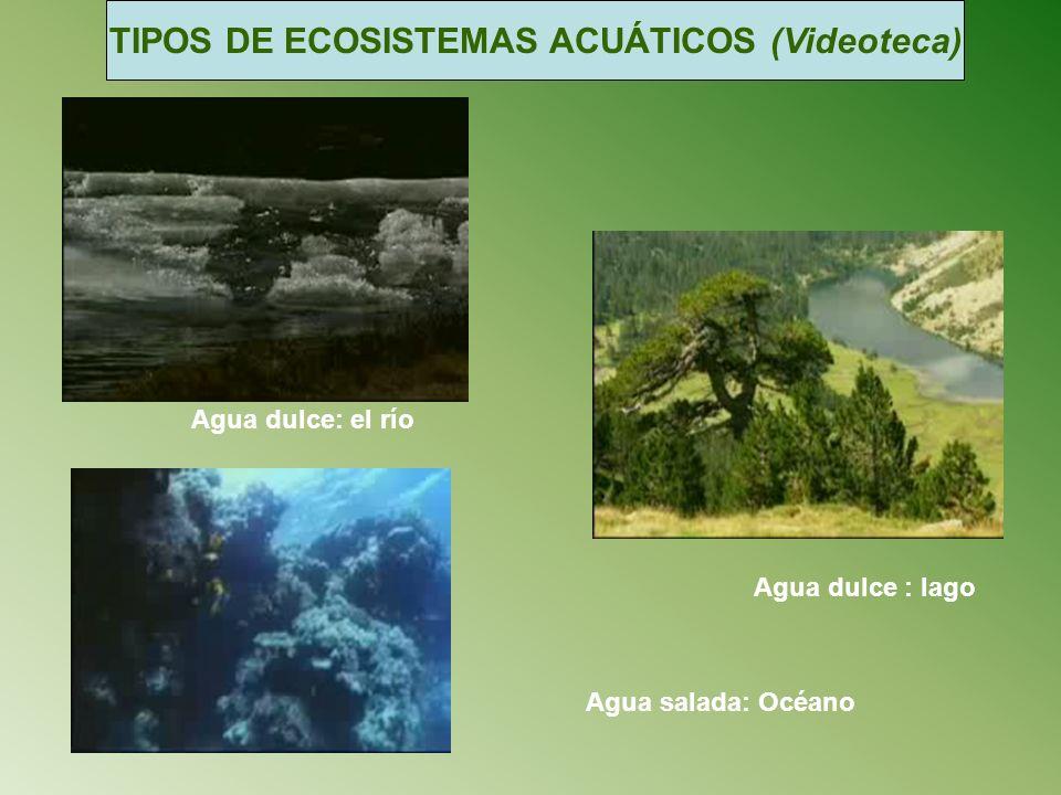 TIPOS DE ECOSISTEMAS ACUÁTICOS (Videoteca)