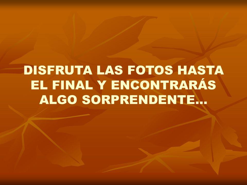 DISFRUTA LAS FOTOS HASTA EL FINAL Y ENCONTRARÁS ALGO SORPRENDENTE…
