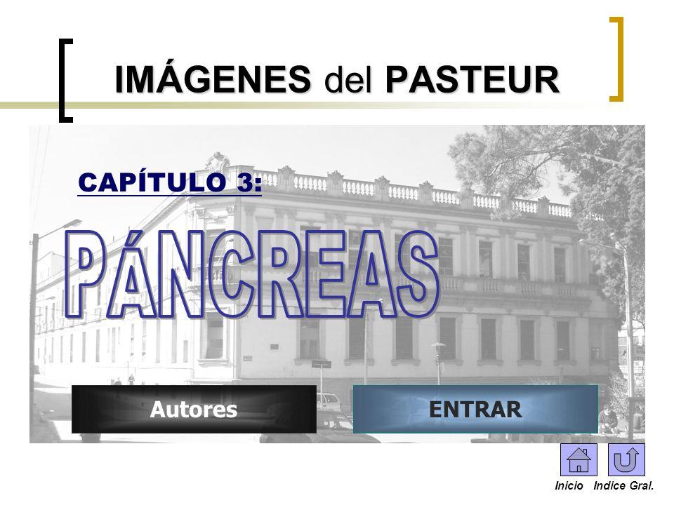 IMÁGENES del PASTEUR PÁNCREAS CAPÍTULO 3: Autores ENTRAR