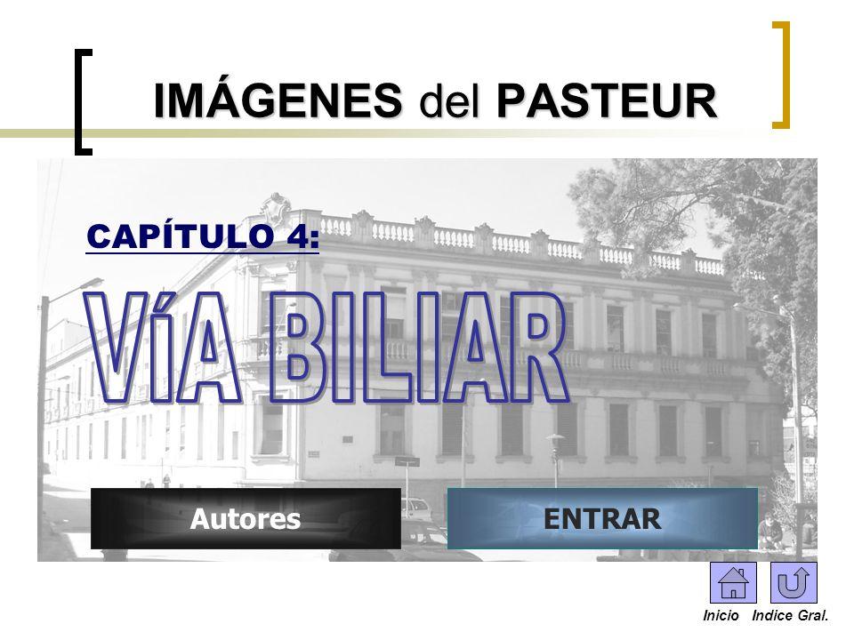 IMÁGENES del PASTEUR VÍA BILIAR CAPÍTULO 4: Autores ENTRAR