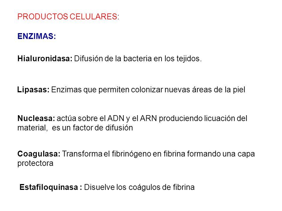 PRODUCTOS CELULARES: ENZIMAS: Hialuronidasa: Difusión de la bacteria en los tejidos.