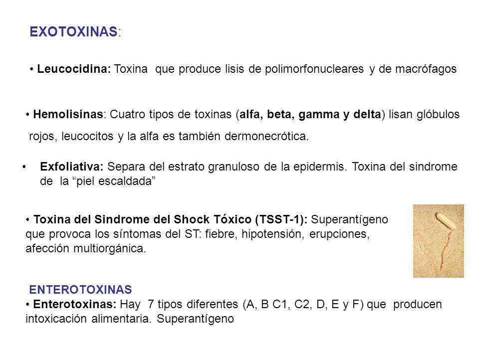 EXOTOXINAS: Leucocidina: Toxina que produce lisis de polimorfonucleares y de macrófagos.