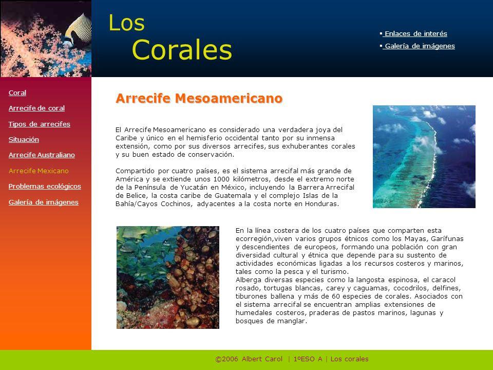 ©2006 Albert Carol | 1ºESO A | Los corales