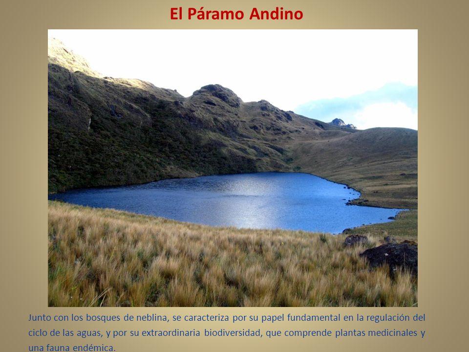 El Páramo Andino