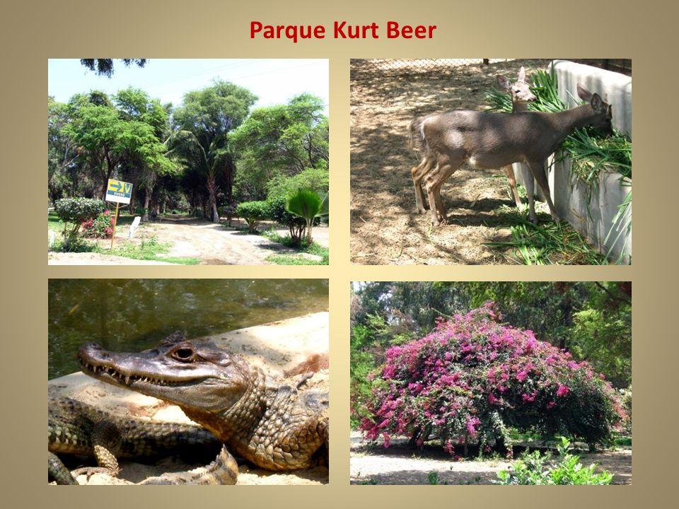 Parque Kurt Beer