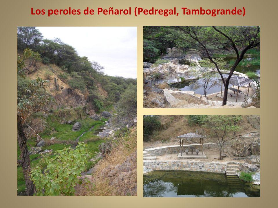 Los peroles de Peñarol (Pedregal, Tambogrande)