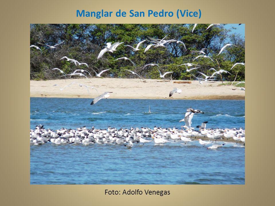 Manglar de San Pedro (Vice)