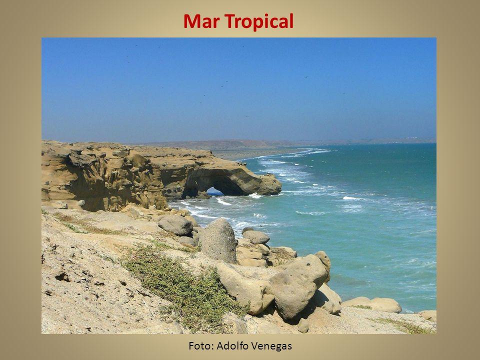 Mar Tropical Foto: Adolfo Venegas