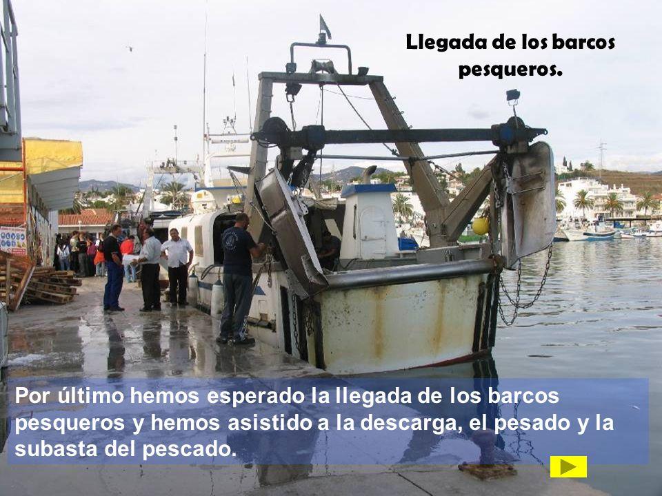Llegada de los barcos pesqueros.