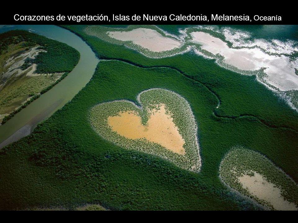 Corazones de vegetación, Islas de Nueva Caledonia, Melanesia, Oceanía
