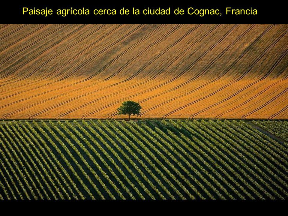 Paisaje agrícola cerca de la ciudad de Cognac, Francia