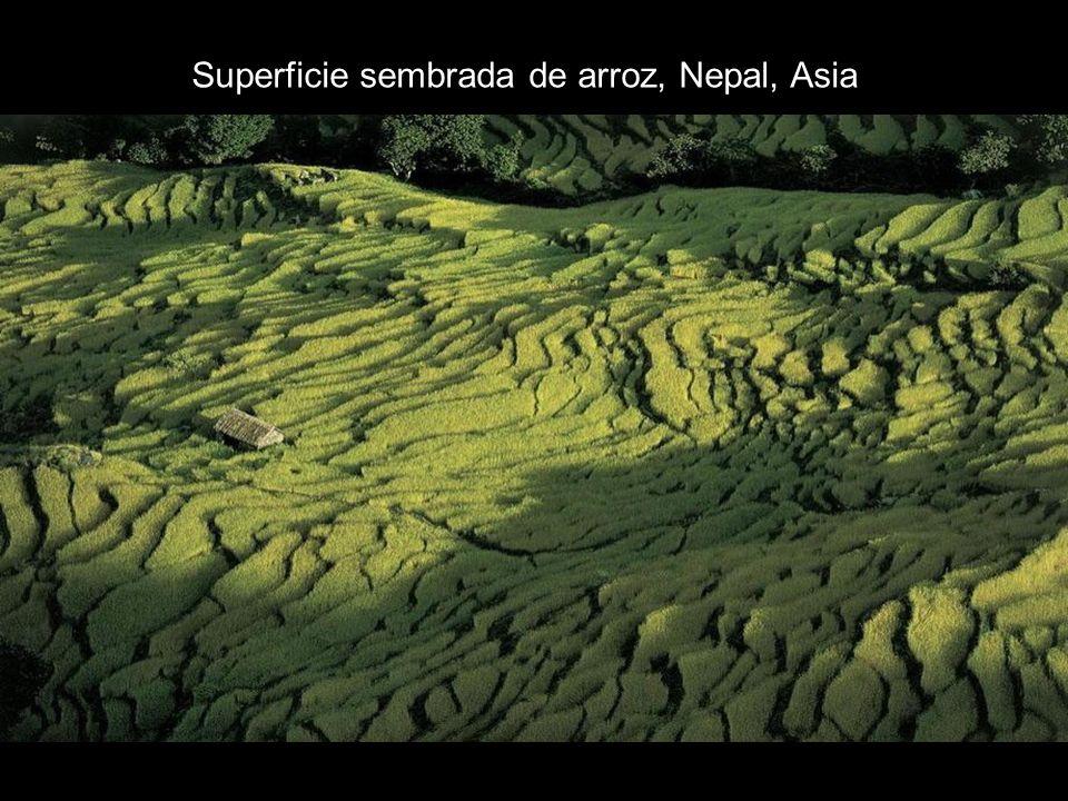 Superficie sembrada de arroz, Nepal, Asia