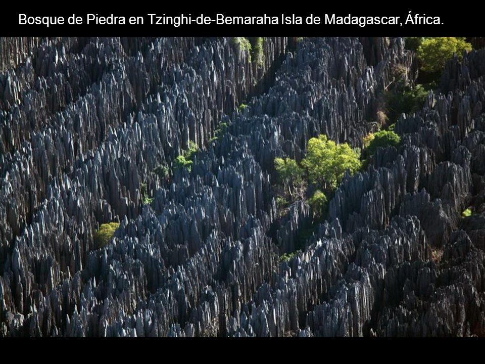 Bosque de Piedra en Tzinghi-de-Bemaraha Isla de Madagascar, África.