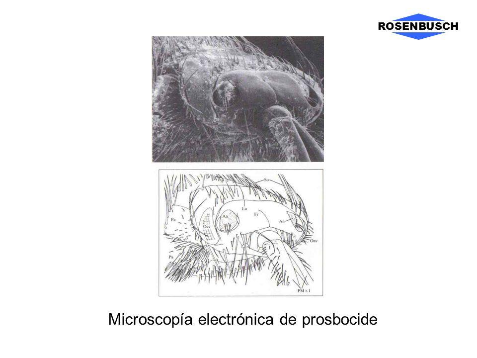 Microscopía electrónica de prosbocide