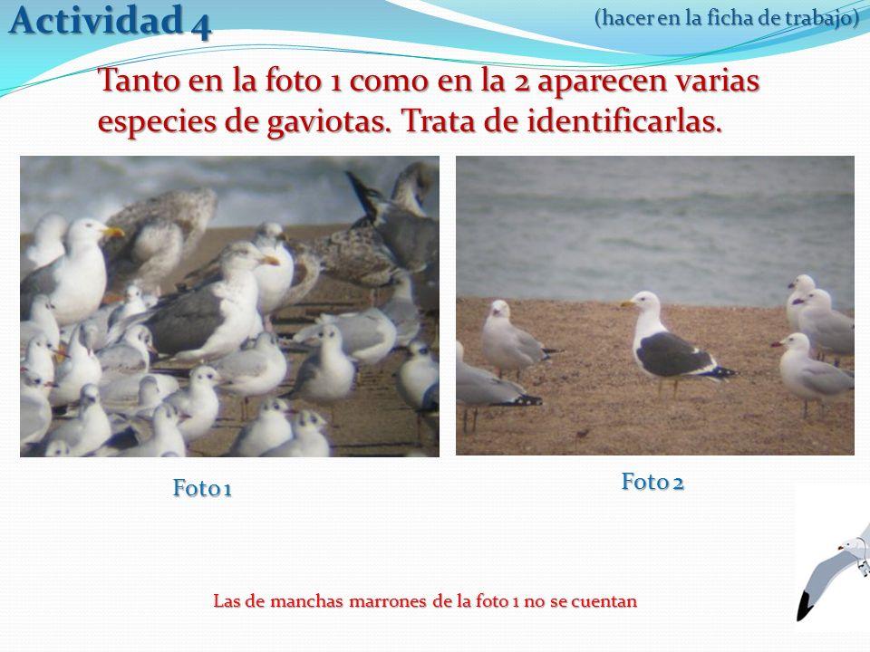 Actividad 4 Tanto en la foto 1 como en la 2 aparecen varias