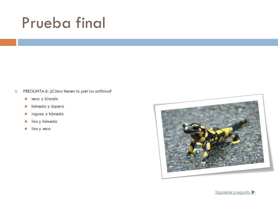 Prueba final PREGUNTA 6: ¿Cómo tienen la piel los anfibios