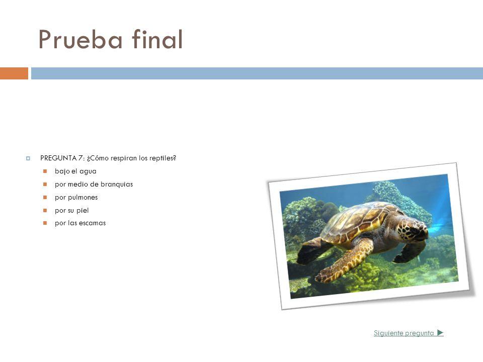Prueba final PREGUNTA 7: ¿Cómo respiran los reptiles bajo el agua