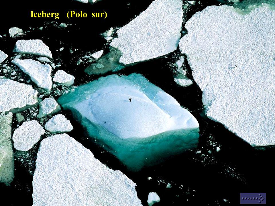 Iceberg (Polo sur)