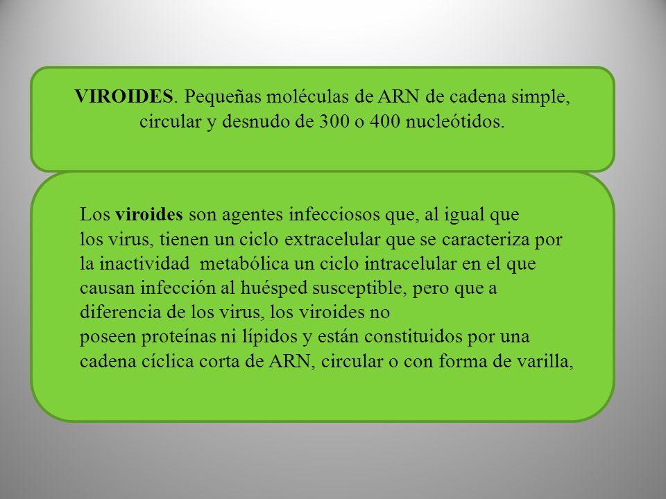 VIROIDES. Pequeñas moléculas de ARN de cadena simple, circular y desnudo de 300 o 400 nucleótidos.