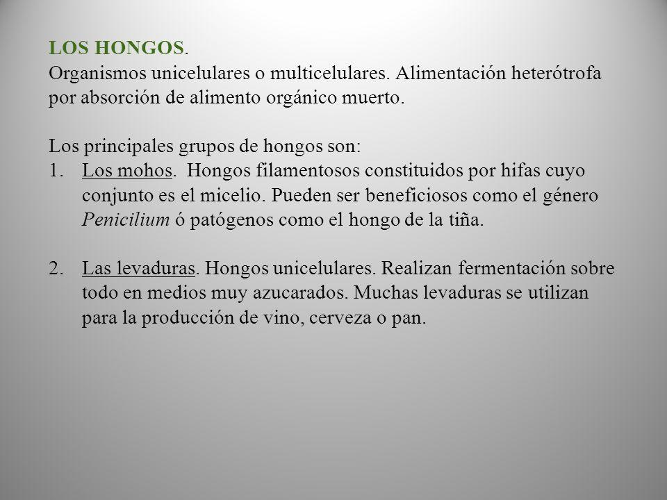 LOS HONGOS. Organismos unicelulares o multicelulares. Alimentación heterótrofa por absorción de alimento orgánico muerto.