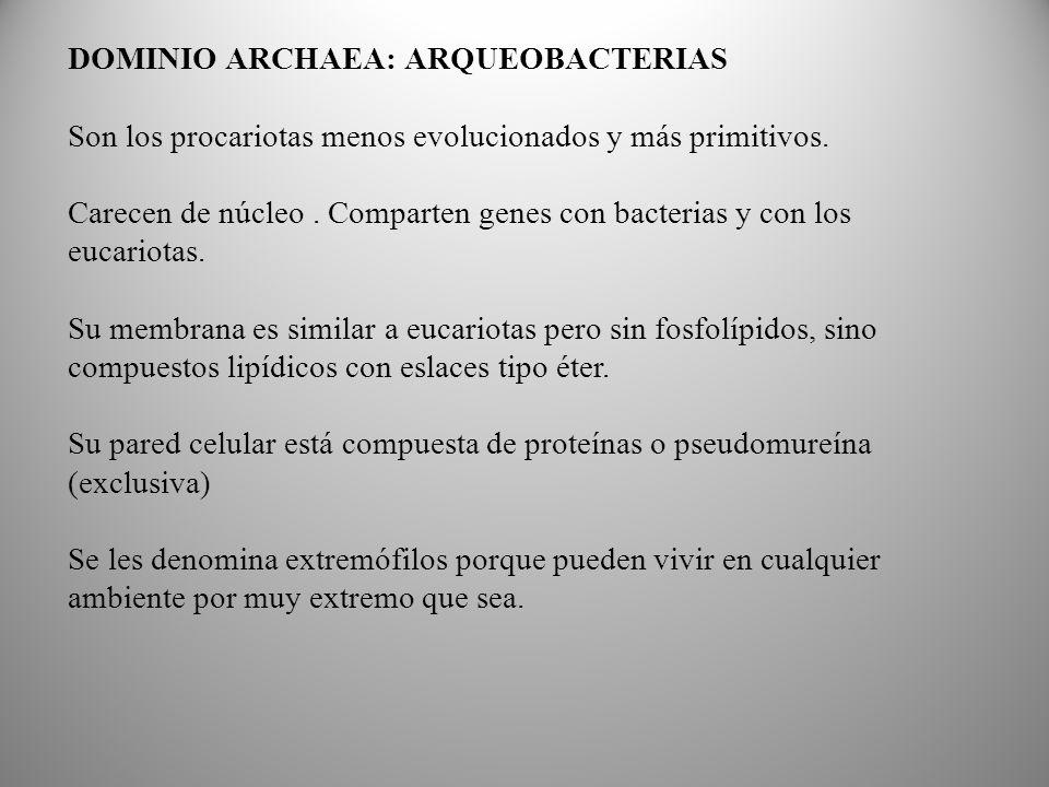 DOMINIO ARCHAEA: ARQUEOBACTERIAS