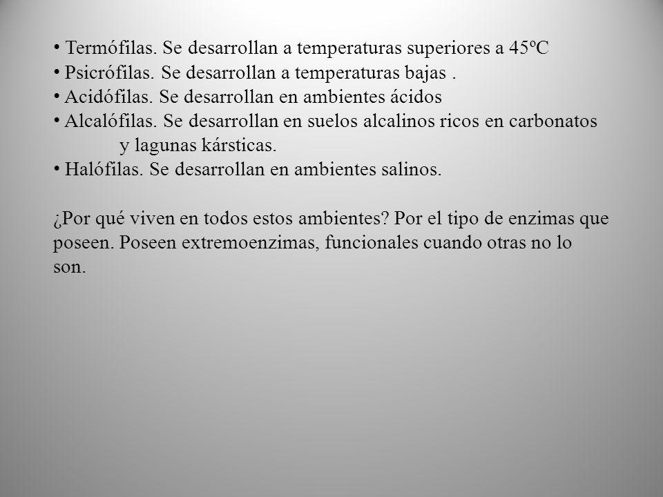 Termófilas. Se desarrollan a temperaturas superiores a 45ºC