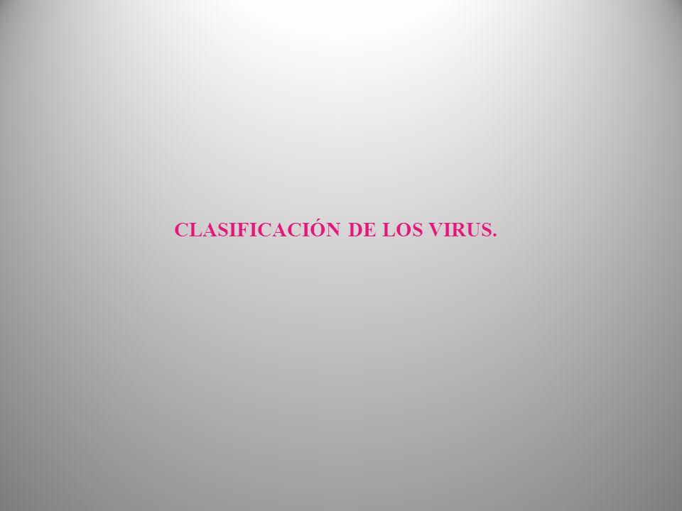 CLASIFICACIÓN DE LOS VIRUS.