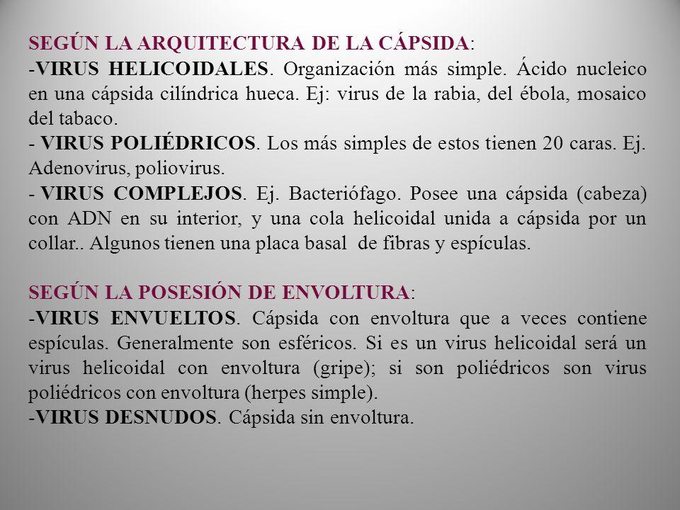 SEGÚN LA ARQUITECTURA DE LA CÁPSIDA: