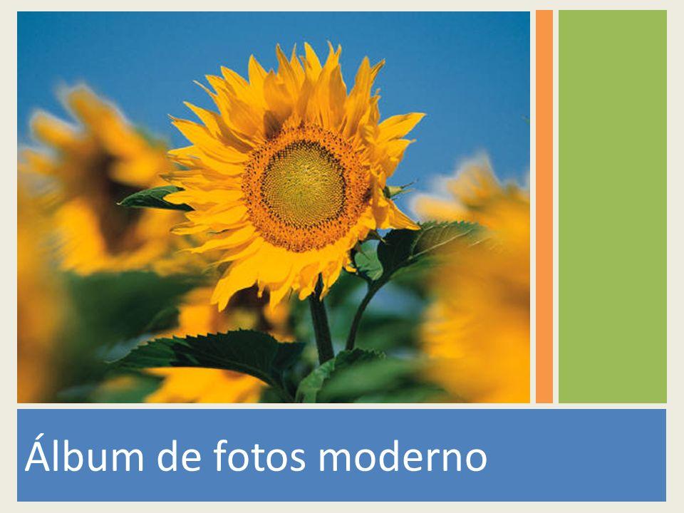 Álbum de fotos moderno 1